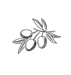 Hand drawn sketch of ripe olives vector