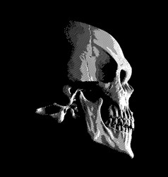 human skull on dark background vector image vector image