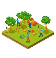 fruit garden harvesting gardening isometric vector image