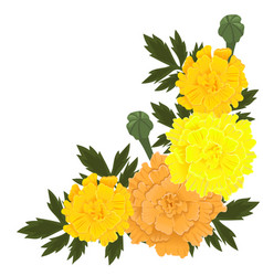 Marigold flowers yellow and orange color vector