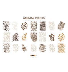 Tiger prints patterns safari leopard jaguar skin vector