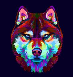 Abstract multi-colored portrait siberian husky vector