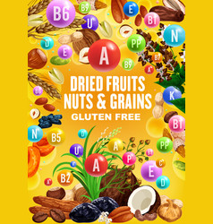 Dried fruits nuts cereal grains beans vitamins vector