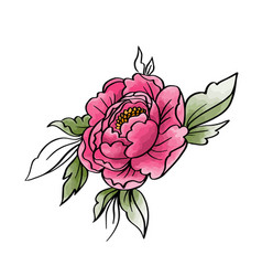 Garden peony watercolor hand painted isolated vector