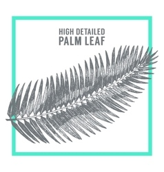 Palm leaves draw sketch vector