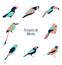 tropical birds icon vector image