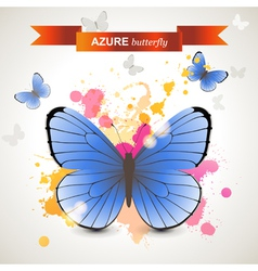 azure butterfly vector image