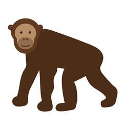 Chimpanzee flat on white vector