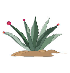 Image agave or color vector