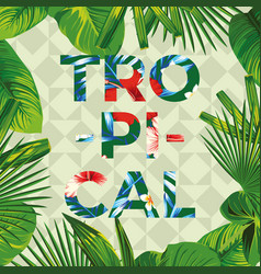 slogan tropical with frame leaves vector image