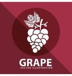 grape icon design vector image