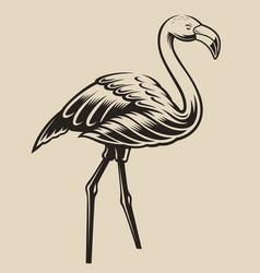 A flamingo vector