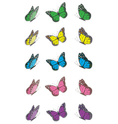 Butterfly wing set vector