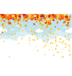 maple leaves fall vector image
