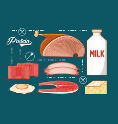 protein diet healthy food vector image