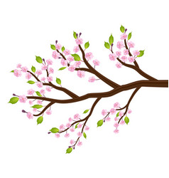 sakura cherry blossom flower leaf tree branch vector image