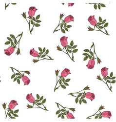 seamless pattern with damask rose vector image