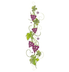 Vine leaves with grapes vector