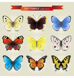 butterfly new vector image