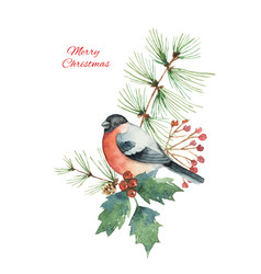 watercolor christmas bouquet with bullfinch vector image