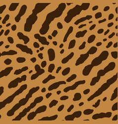 cheetah or ocelot vector image