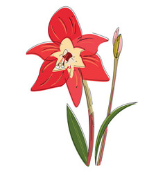 Image amaryllis or color vector