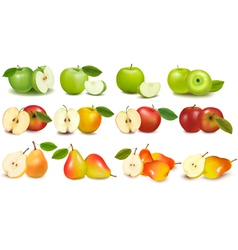 set red and green fruits vector image
