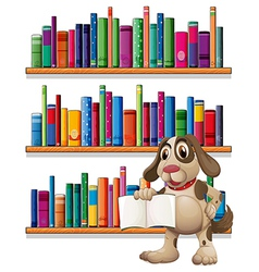 A dog holding a book in front bookshelves vector