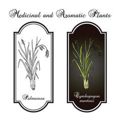 Palmarosa cymbopogon martinii medicinal plant vector