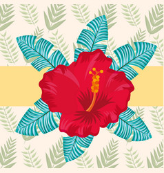 tropical leaves nature vector image
