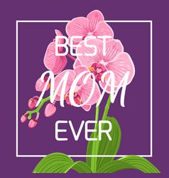 mothers day pink orchid frame violet background vector image vector image