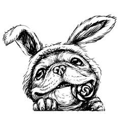a bulldog puppy vector image