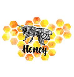 Ee symbol with honeycombs organic honey vector