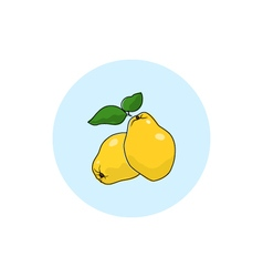 Icon Colorful Quince vector
