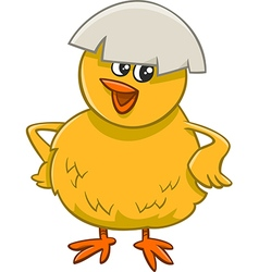 little chick cartoon character vector image
