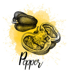 pepper pictured in hand drawn graphics vector image