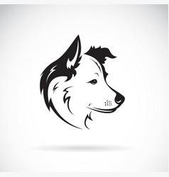 border collie dog on white background pet vector image vector image