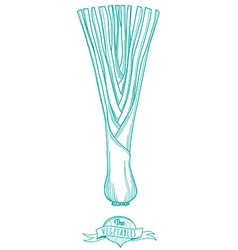 Outline hand drawn sketch of leek flat style thin vector image vector image