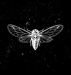 hand drawn cicada mystic entomological illu vector image