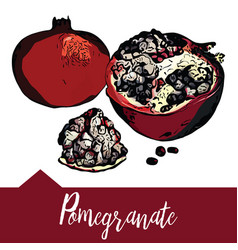 Hand drawn of a pomegranate vector
