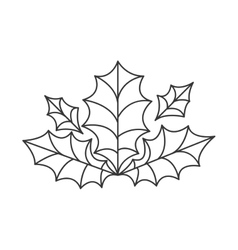 holly berry leaves decoration vector image