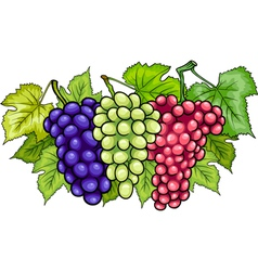 Bunches of grapes cartoon vector