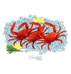 Crabs with rosemary and lemon on ice cubes vector
