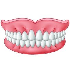 Cartoon model of teeth isolated on white backgroun vector image