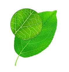 Detailed green leaf vector image