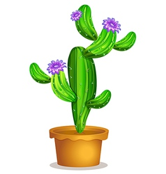 A cactus plant in a pot vector
