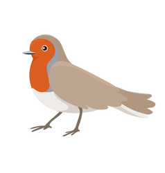 Robin bird sitting isolated on a white background vector