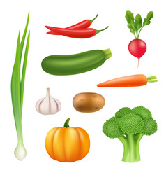 vegetables realistic pictures healthy fresh food vector image