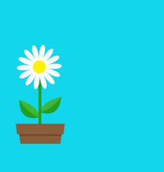 White daisy chamomile icon flower pot cute plant vector