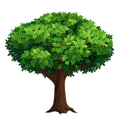 A large tree with thick crown vector